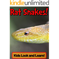Rat Snakes! Learn About Rat Snakes and Enjoy Colorful Pictures - Look and Learn! (50+ Photos of Rat Snakes) (English Edition)