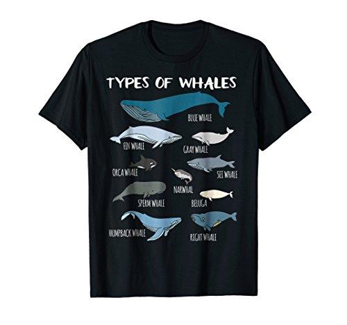 Types Of Whales Cute Ocean Mammals Guide T Shirt