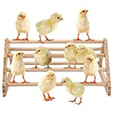 GINTUTO Chicken Perch Strong Pine Wooden Chick