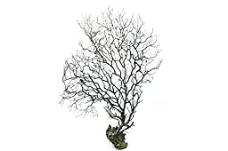Generic 35cm Jumbo Black Sea Fan Fish Tank Aquarium Decoration, Sea Coral Ornament TR-03 (Pack of 1)