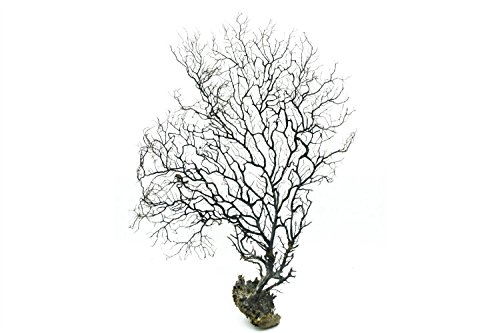 LTWHOME 14 Inch Jumbo Black Sea Fan Fish Tank Aquarium Decoration, Sea Coral Ornament TR-03 (Pack of 1) ()