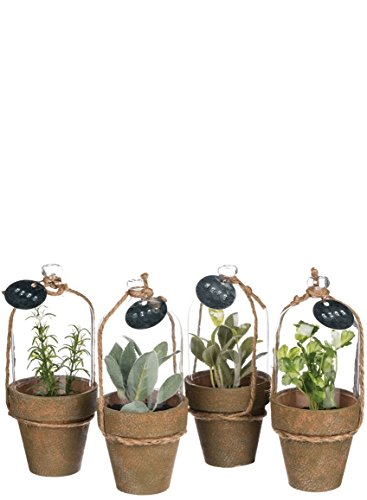 Sullivans Assorted Decorative Herbs in Glass Cloches Artificial Potted Plant Set, 3.5 x 8.5 x 3.5 Inches, Green and Brown, 4