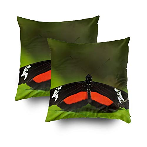 (KIOAO Fall Throw Pillow Covers,Square Throw Pillowcase Covers Butterfly Montane Longwing Heliconius Clysonymus in Nature Habitat Nice from Costa Rica in T Printed with Both Sides 18X18Inch)