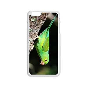 Lovely Parrots Hight Quality Plastic Case for Iphone 6