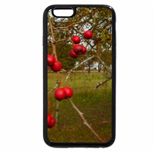 iPhone 6S / iPhone 6 Case (Black) Winter delights for small birds