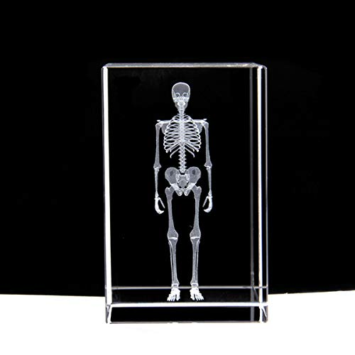 3D Human Skeleton Anatomical Model Paperweight(Laser Etched) in Crystal Glass Cube Science Gift (No Included LED Base)(3.1x2x2 inch)