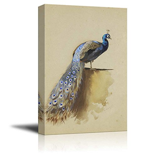 Beautifully Drawn Peacock Standing With it