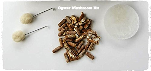 Oyster Mushroom Plug Spawn Starter Kit - Grow Mushrooms at Home (Best Magic Mushroom Spores)