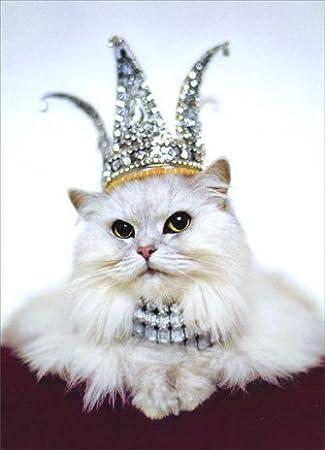 Amazon Princess Kitten Birthday Card Office Products
