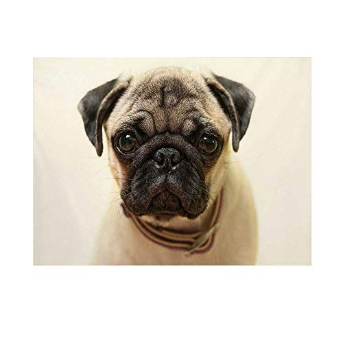 Pug Photography Background,Photograph of a Pug Pure Bred Puppy with a Loose Collar Cute Dog Pets Animal Decorative Backdrop for Studio,15x10ft