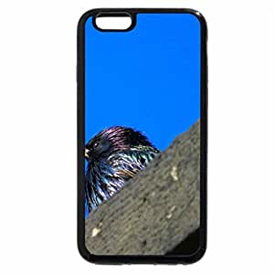 iPhone 6S Plus Case, iPhone 6 Plus Case, Perched on Stone