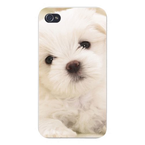 Apple Iphone Custom Case 4 4s White Plastic Snap on - White Maltese Puppy Dog Cute Staring Closeup](Custom Iphone 4 Case)