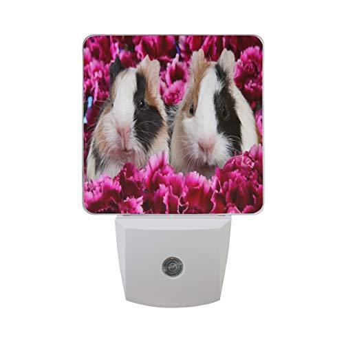 Night Light Pink Flowers Cuties Animal Guinea Pig Night Lamp LED Sensor Auto on/Off Led Plug in Wall Lights 2 Pack ()