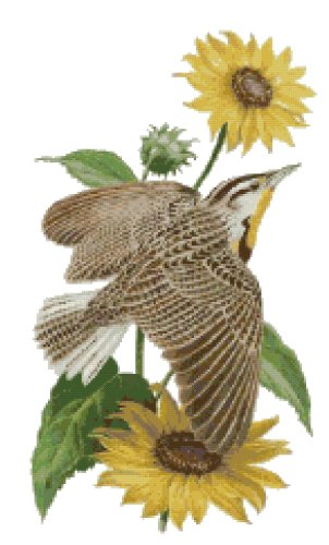 Kansas State Bird (Western Meadowlark) and Flower (Sunflower) Counted Cross Stitch Pattern