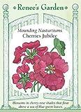 Nasturtium - Cherries Jubilee Seeds