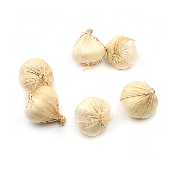 DLUcraft-Fake-Garlic-Artificial-Vegetable-Garlics-Simulation-Lifelike-for-Home-Kitchen-Festival-Decoration-Teaching-Aids-6-PCS