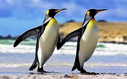 3 D Espacio Juego König Pingüinos, 2erSet, Juego de mesa, Pingüino, animales Animales: Amazon.es: Oficina y papelería