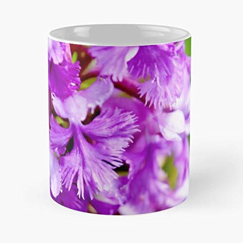 Purple Fringed Orchid - Lesser Purple Fringed Orchid Wild - Funny Gifts For Men And Women Gift Coffee Mug Tea Cup White-11 Oz.