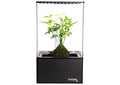 EcoQube Air - Decorative Hydroponics Indoor Herb Home Garden Kit with LED Grow Light, Basil Seeds and True Hepa-Type Filter Air Purifier by EcoQube