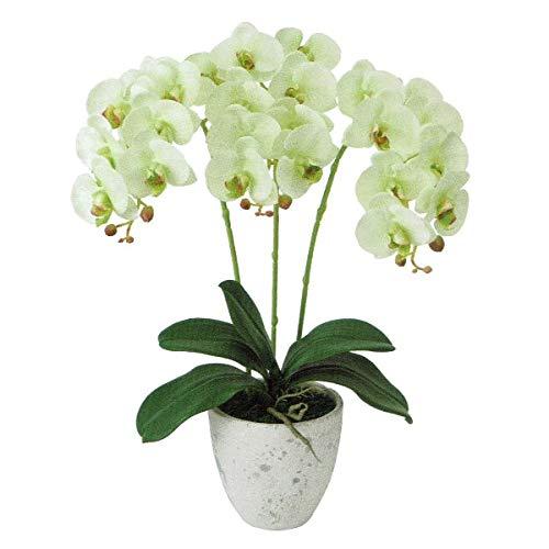 人工観葉植物 ピュアオーキッド3本立(フローラファレノ)ライトグリーン 光触媒加工 高さ50cm zv8080 (代引き不可) インテリアグリーン 造花 B07SQDS1HG