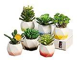 Succulent Plant Pot, 2 Inch 6 Cute Rainbow Ceramic Pot Cactus Plant Pot Color Indoor Outdoor Garden Balcony Barrel Container Planter (Plant not Included)