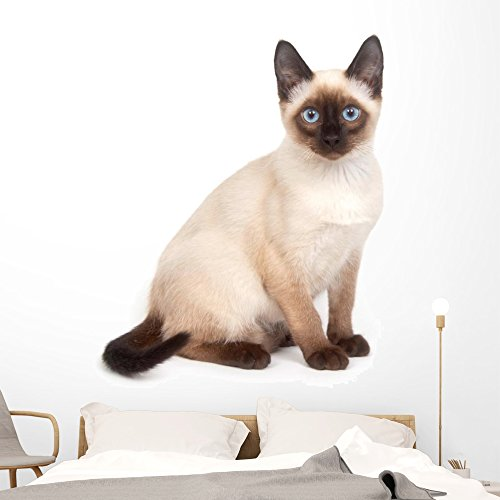 Cheap  Siamese Cat with Bright Wall Decal Wallmonkeys Peel and Stick Animal Graphics..
