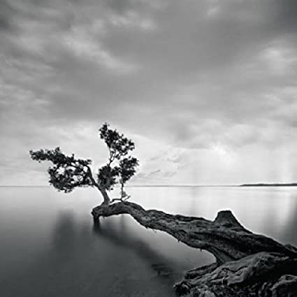 Water tree moises levy photograph black and white water scene nature poster choose size of