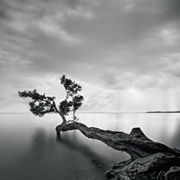 Amazon com water tree moises levy photograph black and white water scene nature poster choose size of print posters prints