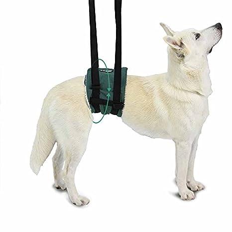 Banda de Ayuda - XL: Amazon.es: Productos para mascotas