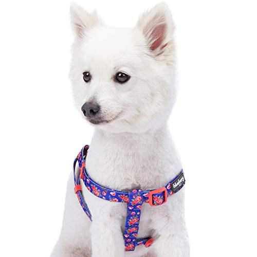 Blueberry Pet Step-in Spring Scent Inspired Rose Print Irish Blue Dog Harness, Chest Girth 20 - 26, Medium, Adjustable Harnesses for Dogs