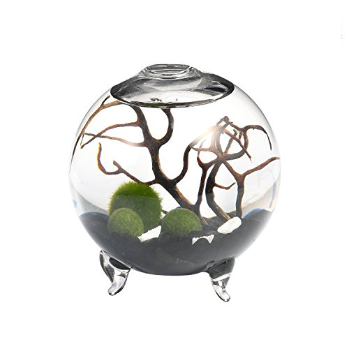 Obsidian Aquarium Marimo Kit - 4 Inch Footed Glass Vase Globe Terrarium with 3 Moss Balls Black Chip Gravels Fan Coral Shells Perfect for Desk Decor Birthday Gift for Fathers