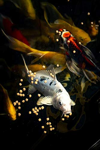 Blue Ridge Fish Food Pellets [50lb] | Koi and Goldfish Platinum Professional Formula | Floating Large Pellet, Balanced Diet