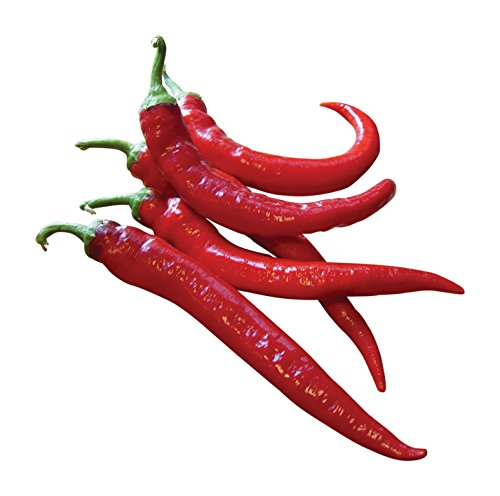 Red Cayenne Seeds (Burpee Large Red Cayenne Hot Pepper Seeds 100 seeds)