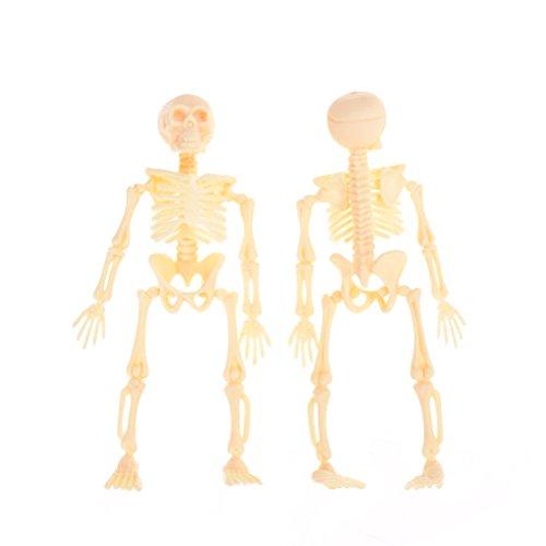 Autumn Water Halloween Movable Mr. Bones Skeleton Human Model Skull Full Body Mini Figure Toy Skeleton 11.5X5.5X2.5CM by Autumn Water