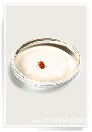 Lovely Ladybug Crystal Oval Paperweight