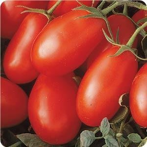 - Clovers Garden La Roma Red Tomato Plant - Two (2) Live Plants - Not Seeds -Each 5