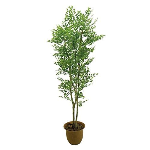 人工観葉植物 ゴールデンリーフ1.8m 高さ180cm sk2008 (代引き不可) インテリアグリーン 造花 B07SYG5CPC