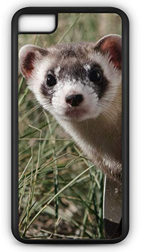 iPhone 7 Case Black Footed Ferret Weasel Nocturnal Customizable by TYD Designs in Black Plastic