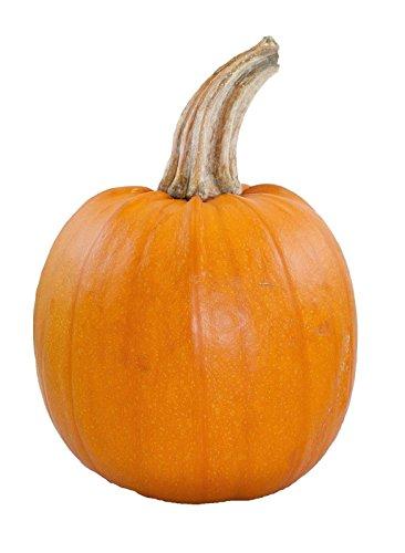 (Pumpkin Small Sugar Pie Non GMO Heirloom Garden Vegetable 50 Seeds Sow No GMO USA)