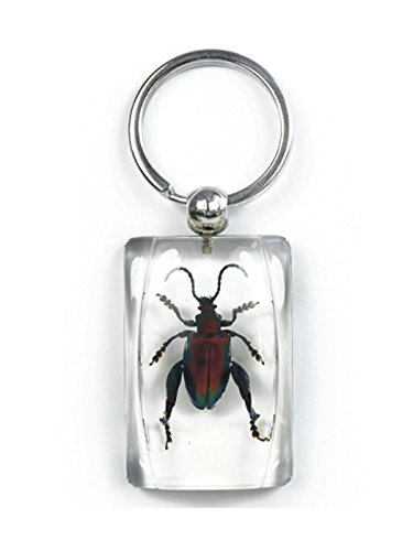 Clear Lucite Charm Keychain w/ Jewel Frog Beetle ()