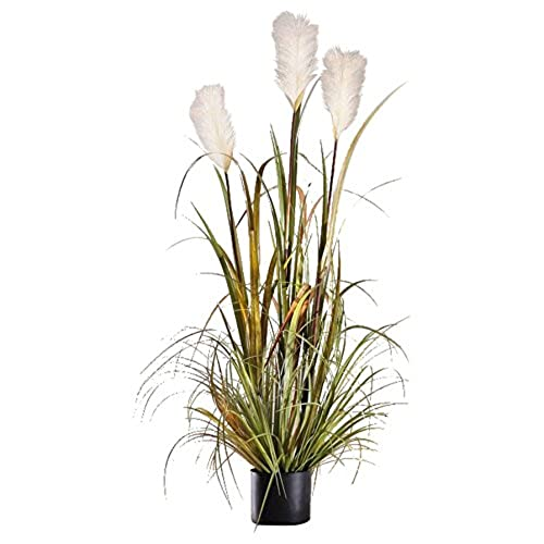 Tall Indoor Plants: Amazon.com