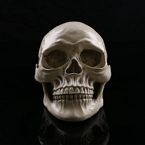 Price comparison product image Tinksky Lifesize 1:1 Human Skull Model Replica Resin Medical Anatomical Tracing Skeleton with Movable Teeth Halloween Decorations