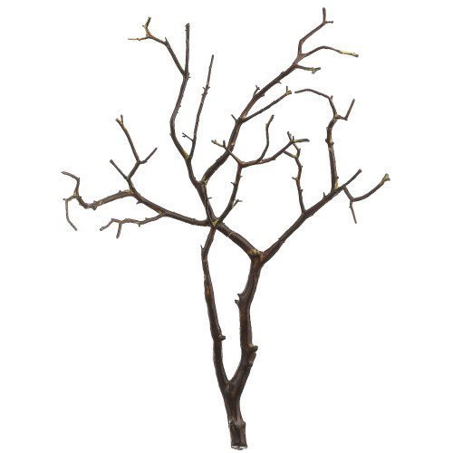 - Koyal Wholesale Real Manzanita Branches, 24-Inch, Natural Brown