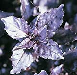 Basil Purple Osmin Ocimum basilicum 2,000 Seeds