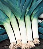 December01 &Leek Heirloom Blue De Solaise Finest Seeds (Pack of 1000)