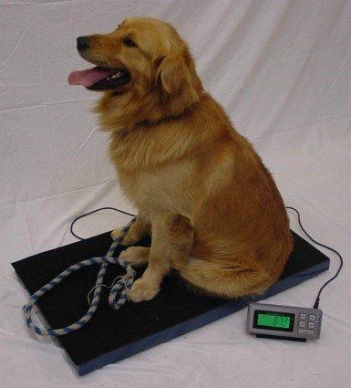LW Measurements LC-VS Veterinary Scale 400lb x 0.1lb 38 x 22 inch Platform Scale by LW Measurements, LLC