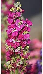 Potseed . Semillas de Flores: acciones de Flores Mix Semillas de ...