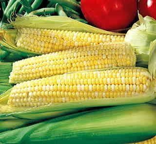Corn Hybrid - Hometown Seeds Ambrosia Hybrid Corn, 140 Seeds