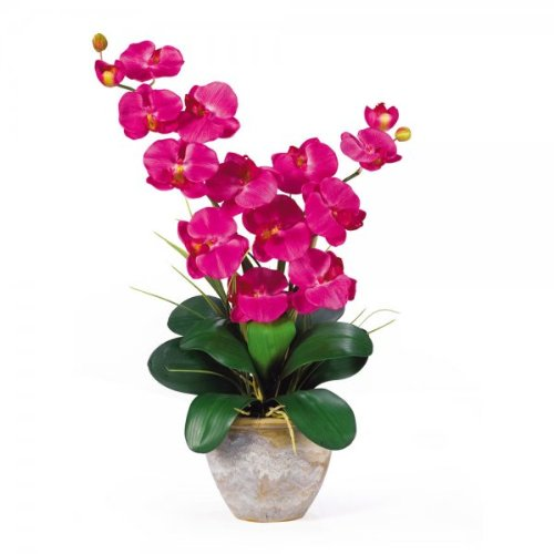 Double Phalaenopsis Orchid Arrangement (Beauty) (25''H x 15.5''W x 12''D)
