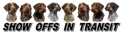 German Wirehaired Pointer Show Off Car Window Sticker (Best German Wirehaired Pointer Breeder)